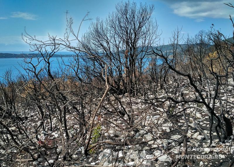 Летом на Луштице случаются пожары