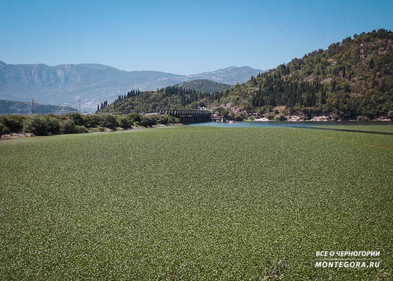 Скадарское озеро и его примечательности
