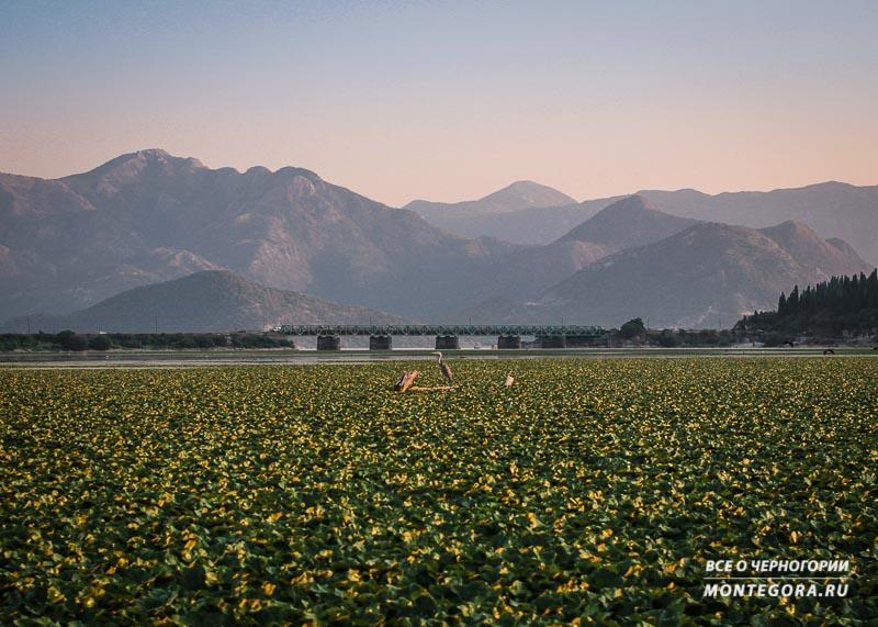Места для красивого фото на фоне гор