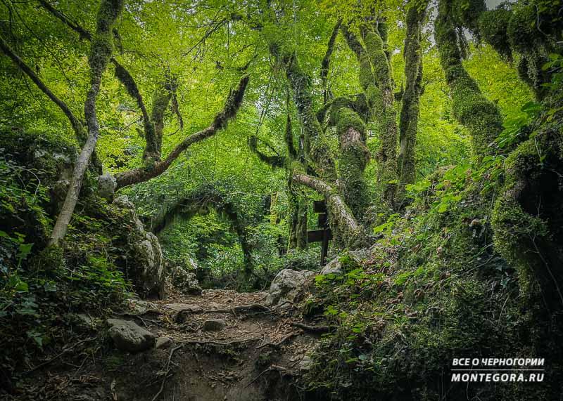 Мистические места в Черногории