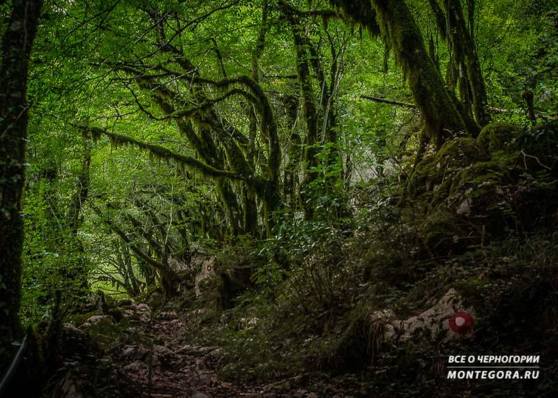 Черногорские сказочные места