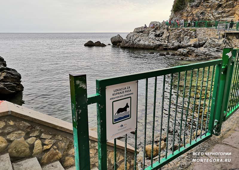 Куда пойти с собакой отдыхать в Черногории